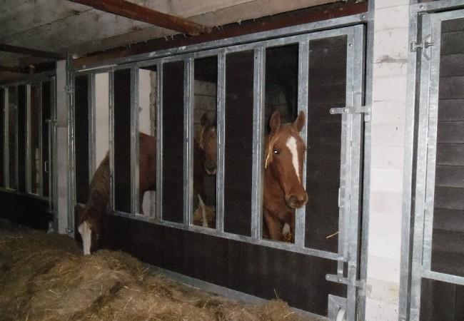 paardenhotel 5.JPG